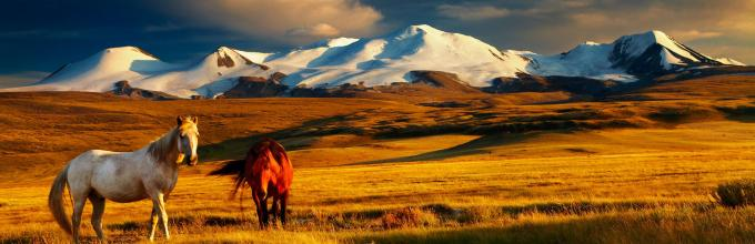 Third Open Conference on Mongolian Studies - Horses Image